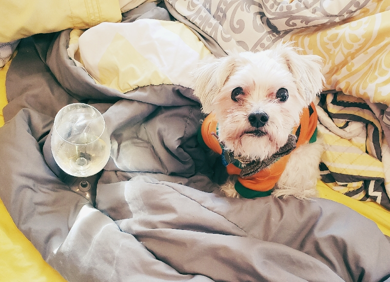 Wine, dogs, and dishes